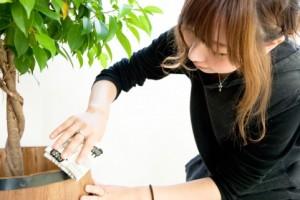 観葉植物の掃除