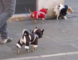 たくさんの犬の散歩
