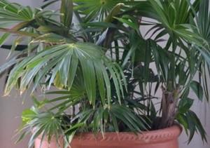 葉っぱの多い観葉植物