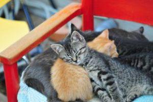 眠っている子猫たち