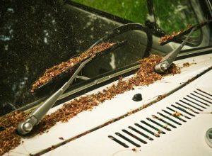 ワイパーに積もった枯葉