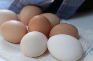 美味しそうな卵