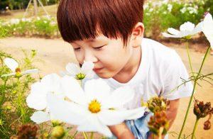 花の香りをかぐ男の子