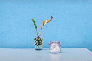 テーブルの上の砂糖と植物