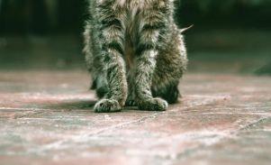 私は猫好きの風上にも置けない存在なのかもしれない・・・